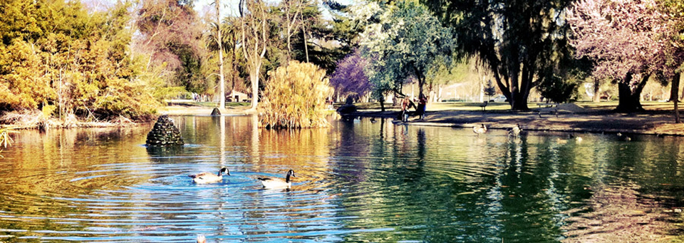 image of the McKinley Park duck pond