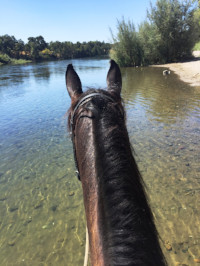 Riding Meditation, Gaited Hooves & Quiet Mind