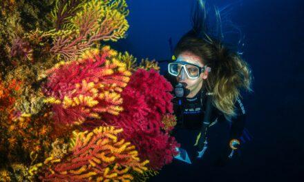 Deep Mindfulness-Diving Beneath the Waves: <br>A Conversation withMindfulness Coach <br>Stephen Walker, LMFT